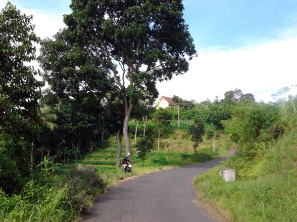Jalan Berliku Menuju SMP Negeri 2 Pagerwojo